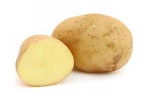 Kartoffel (solanum tuberosum)